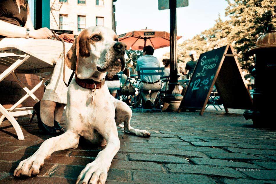 cane città 5