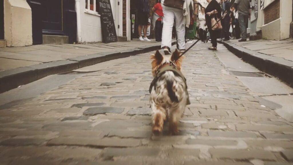 cane città2